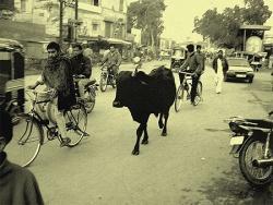 DELHI ! (1991-1998)
