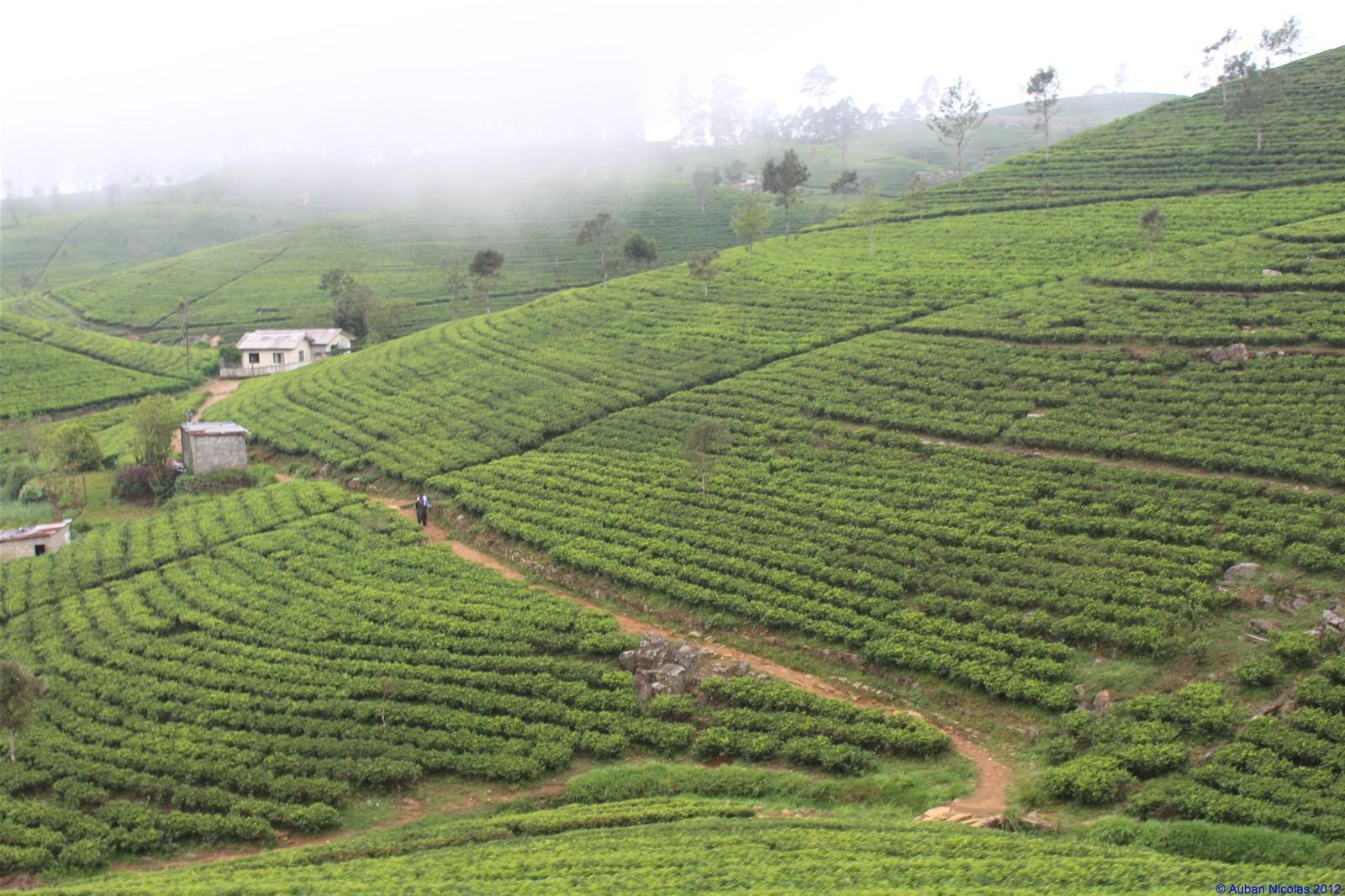 Paroles de voyageurs #7 : Nicolas, le globe-trotteur atypique au Sri Lanka !