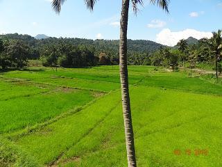Paroles de voyageurs #8 : Sophie voyage en famille au Sri Lanka !