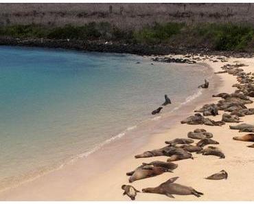 Galapagos : optimiser le coût du voyage