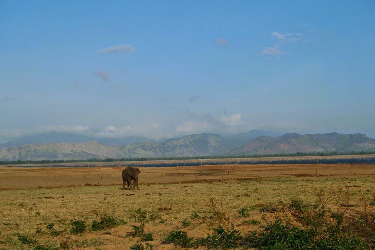 Paroles de voyageurs #10 : Marion, entre découvertes et dépaysement au Sri Lanka !