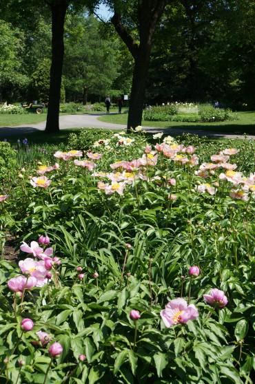 Jardin botanique 29 mai et 16 ao t 2015 for Jardin botanique rabais 2015