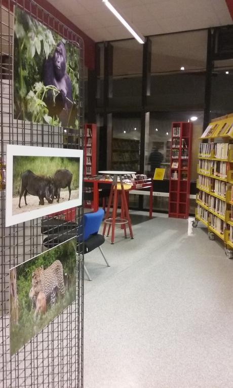 Expo photo au cœur de la bibliothèque