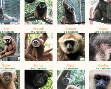 Et si on essayait de sauver notre peau (et celle des gibbons)?