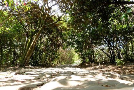 chemin au jardín botánico de Bogotá
