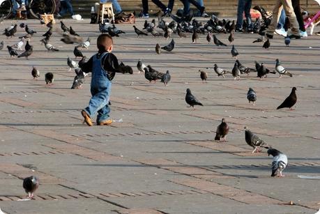petit garçon courant après les pigeons sur la Plaza Bolivar de Bogotá