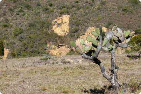 cactus sur le chemin du désert de la tatacoita de Nemocón