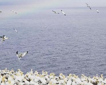5 bonnes raisons de visiter la Pointe de la Gaspésie (+ vidéo)