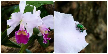mouche sur une fleur d'orchidée au jardin botanique de Medellín