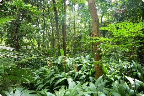 Petite forêt au jardin botanique de Medellín