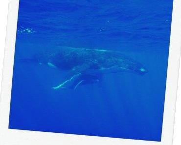 Sortie baleine : LA chose à faire dans sa vie