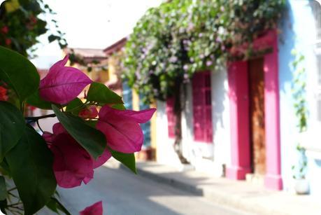 mise au point sur des fleurs roses en premier plan et aperçu de jolies maisons colorées (rose, blanc, bleu) en arrière plan à Carthagène