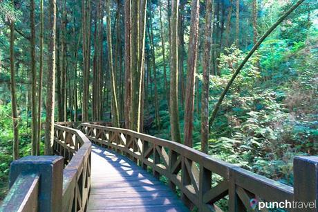alishan_forest_taiwan-4