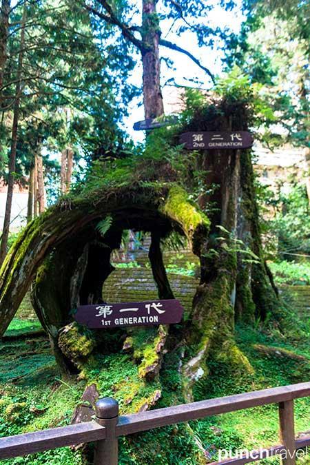 alishan_forest_taiwan-9