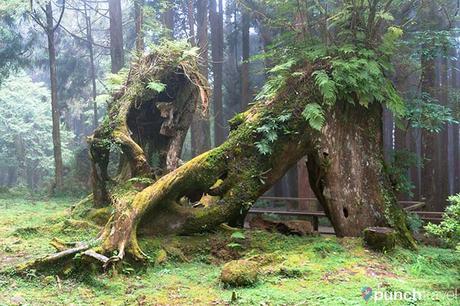 alishan_forest_taiwan-14