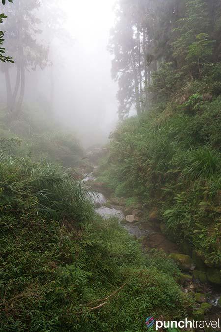 alishan_forest_taiwan-15