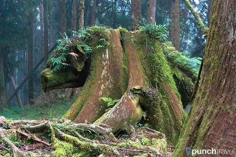 alishan_forest_taiwan-8
