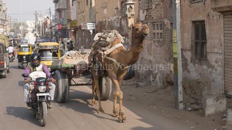 Quand tu arrives en Inde…