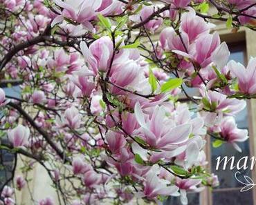 Mon joli mois de... #7 - Mars