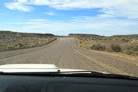 Punta Tombo en Patagonie : la mecque des manchots de Magellan !