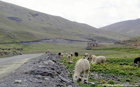 Pampalarama : 4400 m d'altitude au bout du monde