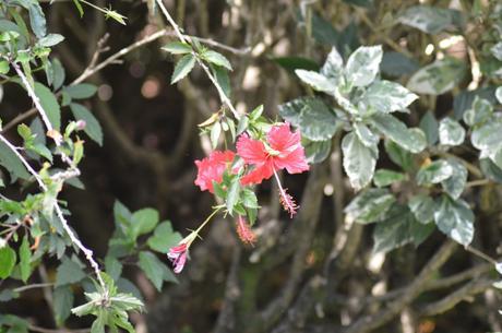 Jardin botanique, Dehaies