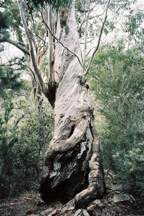 Cinq jours de voyage en Tasmanie