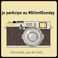 Silent Sunday 2017 #19