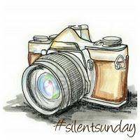 Silent Sunday 42 ... allons compter fleurette