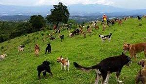 Territoire Zaguates paradis chiens