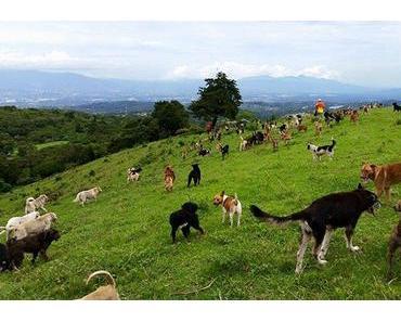 Territoire de Zaguates : paradis des chiens de rue