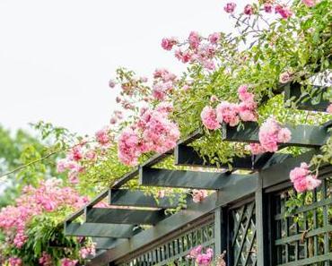 La roseraie de l'Hay-les-Roses