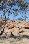 Centre rouge australien : itinéraire de quatre jours en famille
