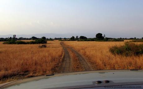 Ouganda, terre de lions, d'hippos et de chimpanzés