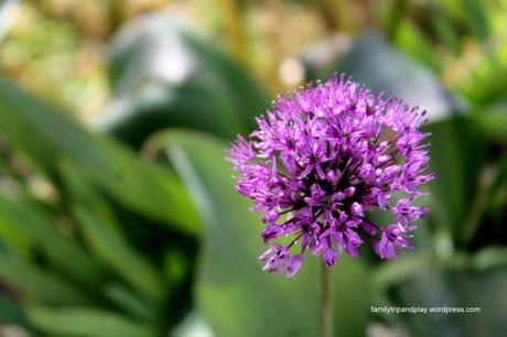 Au jardin : fleurs et papillons