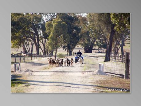 Culture australienne (Vidéo) : Denis, le fermier du South Australia réponds à nos questions
