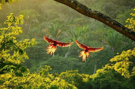Nat Geo prépare une série sur les forêts du Costa Rica