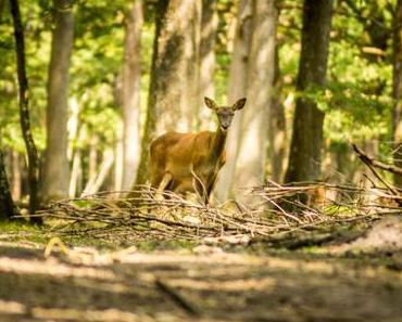 Au cœur de la nature à Rambouillet
