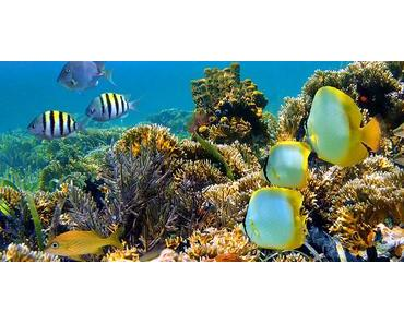 Retour d'expérience d'Emily – Projet de conservation marine aux Seychelles