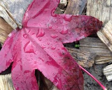 La photo du mois se fait automne