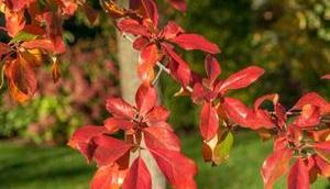 balades l'automne