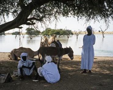 Oasis du Darfour