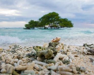 Les meilleurs spots de surf, snorkeling et plongée à Bali