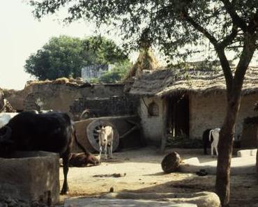 Sur la route de Jaipur