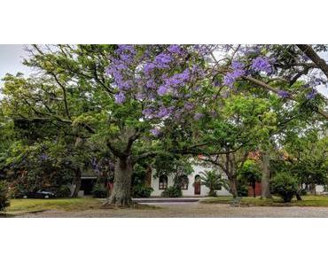 Colonia – Carmelo – Tigre : week-end escapade autour du Rio de la Plata