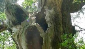 Projet arbre