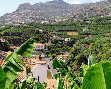 Câmara de Lobos à Madère un village au mileu de la bananerai