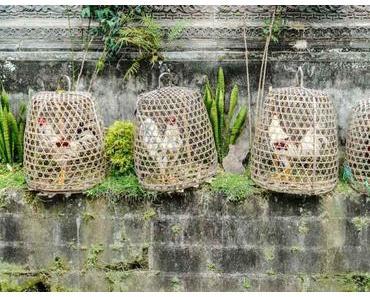 Le guide ultime pour visiter Ubud: que faire, où manger, où dormir ?