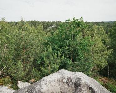 Forêt de Fontainebleau :  Les Gorges d'Apremont