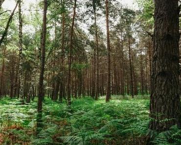 Fontainebleau :  Les Gorges d'Apremont